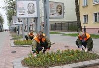 Полтора миллиона штук цветочной рассады используют для озеленения Могилева