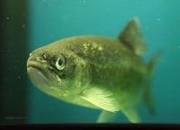 Три комплекса по выращиванию ценных пород рыбы построят в Могилевской области к концу года