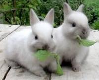 Подписан инвестдоговор о строительстве кролиководческого комплекса в Дрибинском районе
