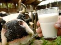 Производители молока Могилёвской области получили право реализовывать молоко по свободным ценам